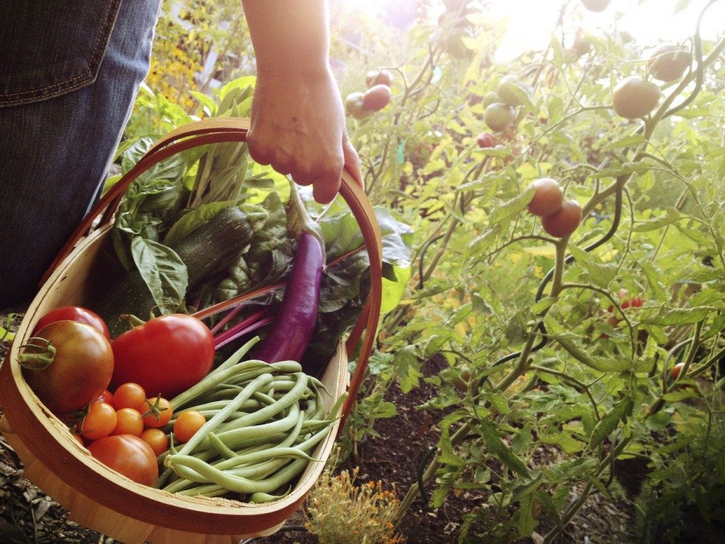 nutrition, food, health care, vitality