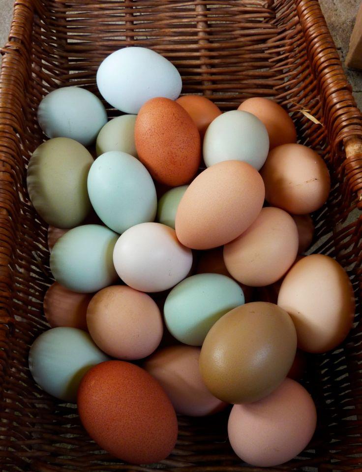 Eggs omega 3